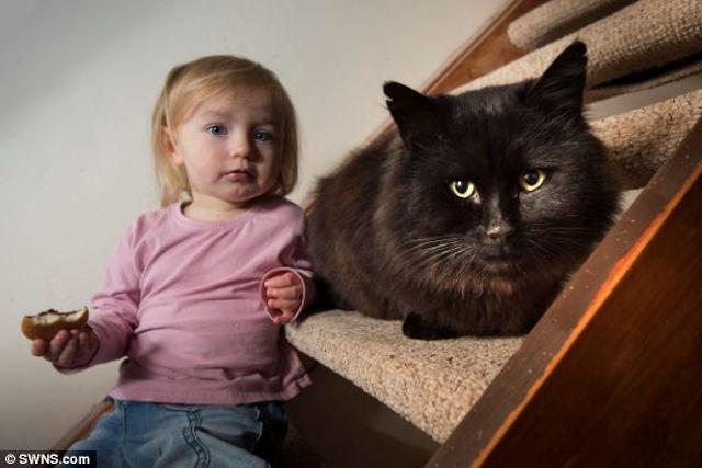 Кастрация спасла людей от нападений кота-дьявола