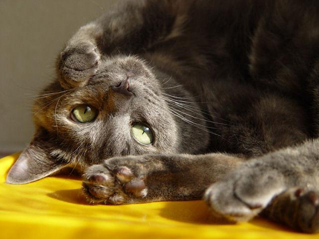 Китайцы похищают котов и съедают их?
