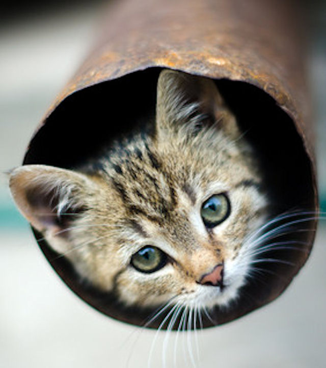Китайский котёнок стал заложником трубы
