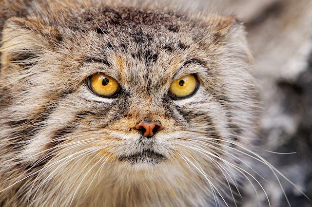 Конкурс талисманов Московского зоопарка признан несостоявшимся
