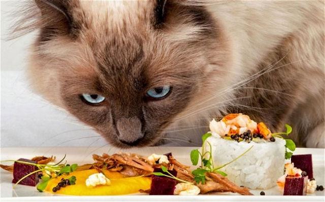 В Англии открылся кошачий ресторан с изысканным меню