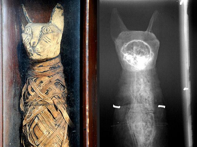Кошачья мумия на чердаке напугала англичанина