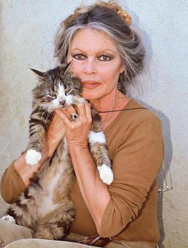 Кошка Брижит Бардо сбежала от хозяйки