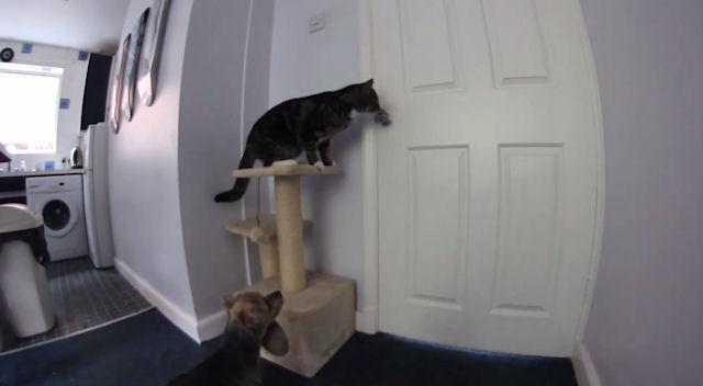 Кошка и собака устроили совместный забег