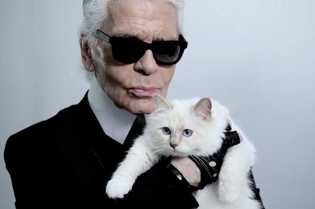 Кошка известного модельера стала героиней книги