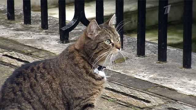 Кошка Минфина Великобритании заставила хозяина понервничать