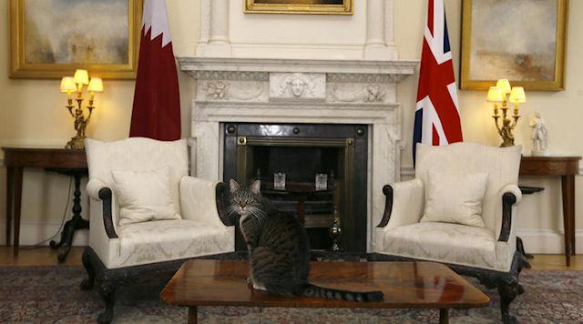 Журналисты записали кошку министра финансов в шпионки