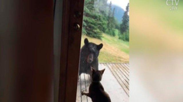 Кошка Нэни – гроза медведей