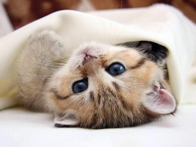 Кошка выжила под капотом автомобиля
