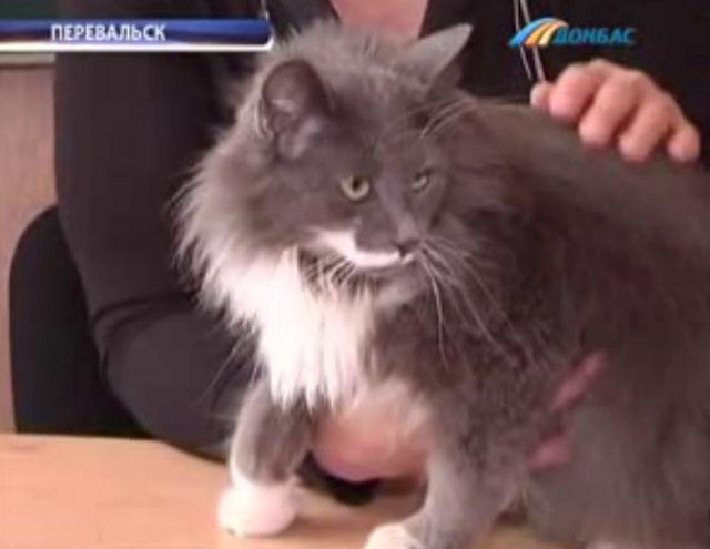 Кошка помогает учиться детям-аутистам
