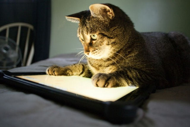 Кошка позаботилась об оплате коммунальных услуг