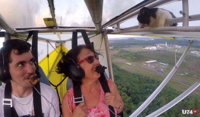 Кошка прокатилась на крыле самолёта