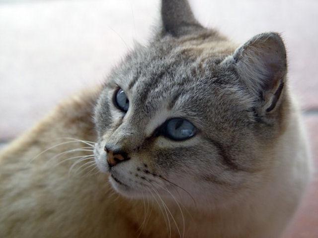 Кошка Пуховка спасла хозяев от пожара