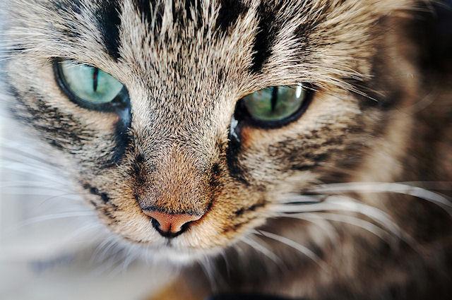 Кошка могла подружиться с человеком 5,3 тыс. лет назад