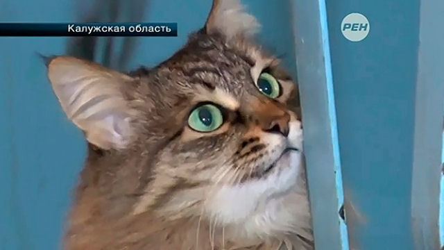 Кошка спасла брошенного младенца