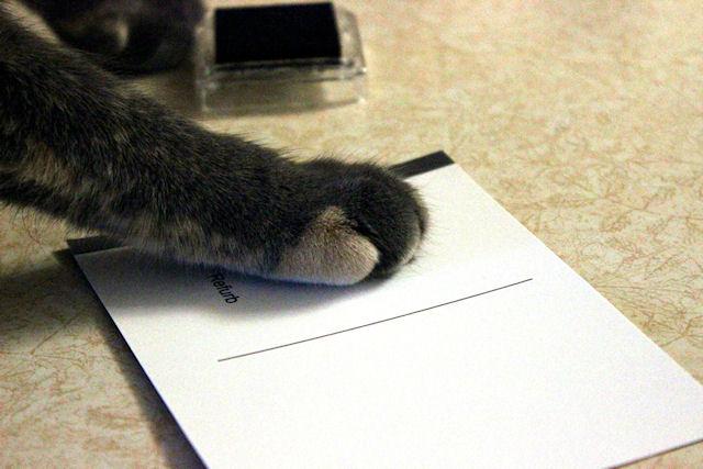 Кошка помогает финансировать приюты и благотворительные фонды