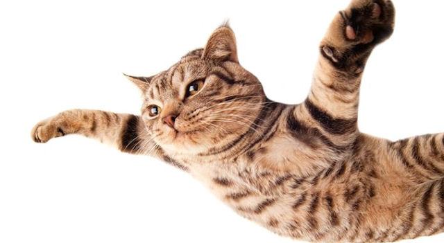 Кошка стала причиной нарушения авиационной связи