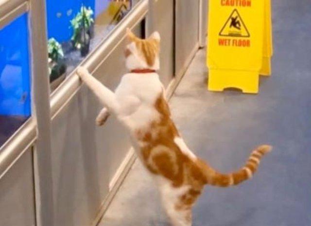 Кошка стала постоянным клиентом магазина в Бостоне