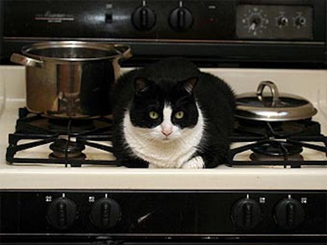 Кошка стала виновницей пожара