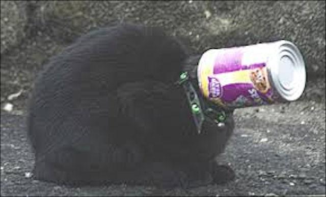 Кошка стала заложницей банки