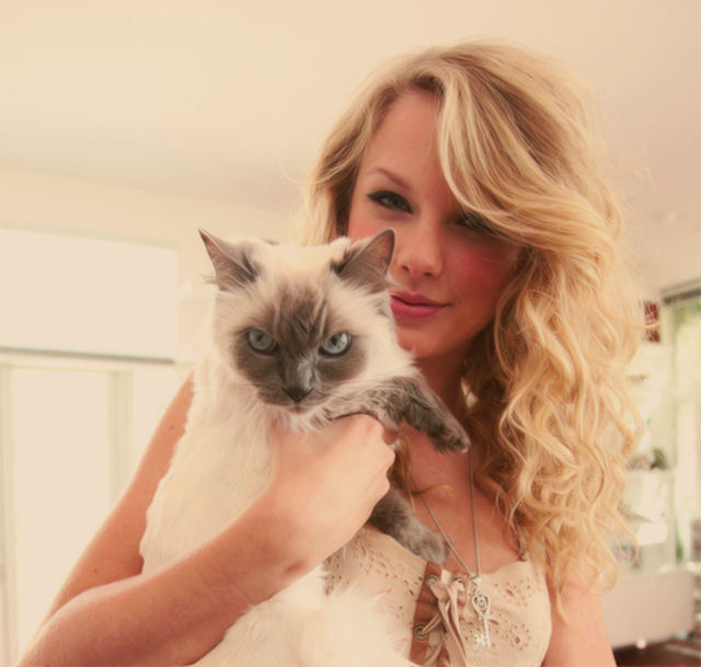 Кошка Тейлор Свифт должна ей 40 миллионов долларов