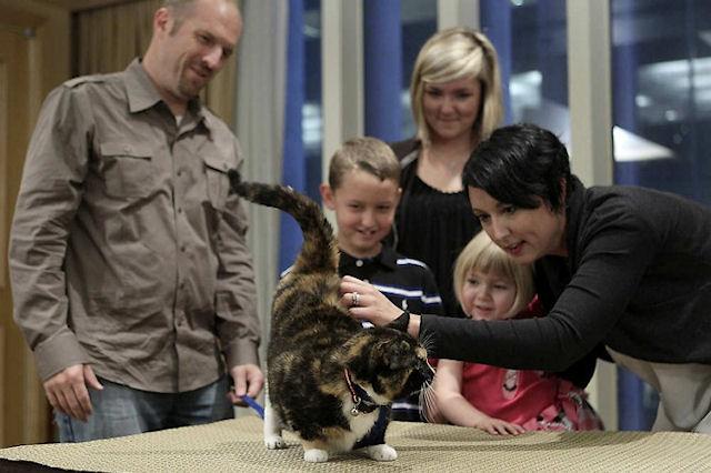 Кошка Уиллоу нашлась в аэропорту после недели скитаний
