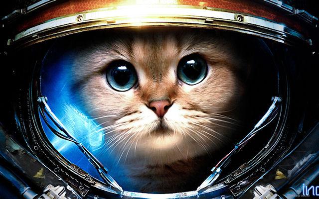 Иран сделает персидскую кошку космическим туристом