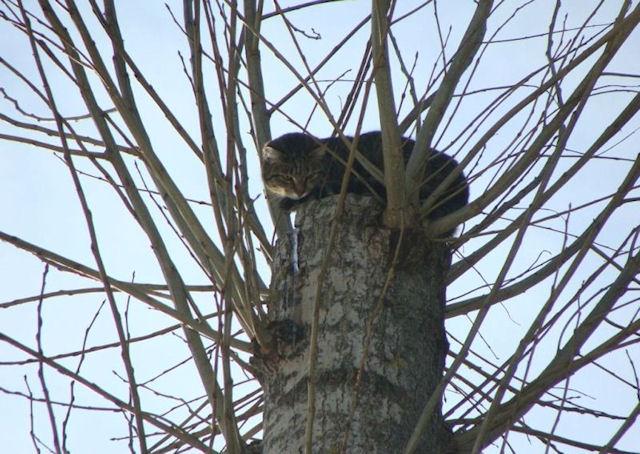 В Липецке всем миром спасали кошку, забравшуюся на тополь