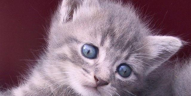 В Нижнем Новгороде покалечили кошку, выбросив ее в мусоропровод
