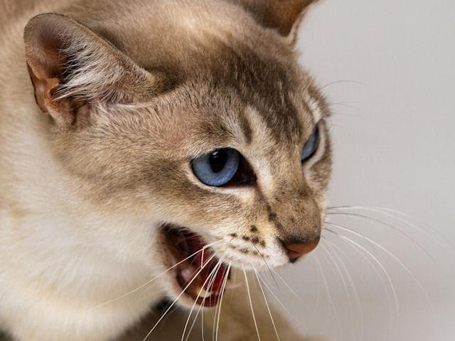 В Подмосковье бешеная кошка искусала шесть человек