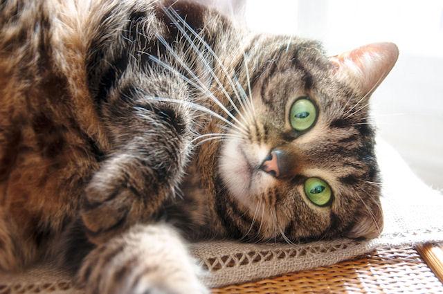 Кошка прошла цикл стирки в стиральной машине и осталась жива