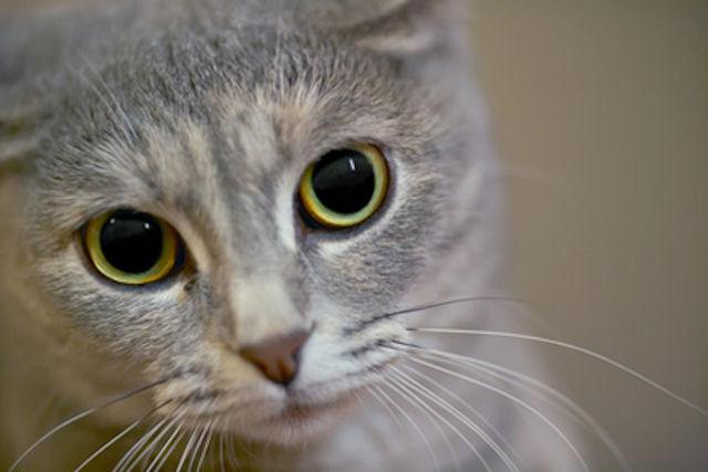 Кошка вернется к хозяевам после 10-месячного путешествия с бездомным