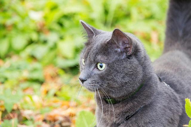 Кошка – домашний врач человека