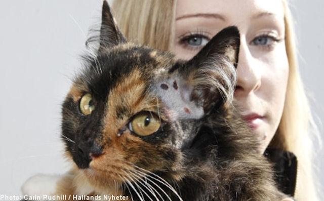 Кошка выжила после 9-ти огнестрельных ранений