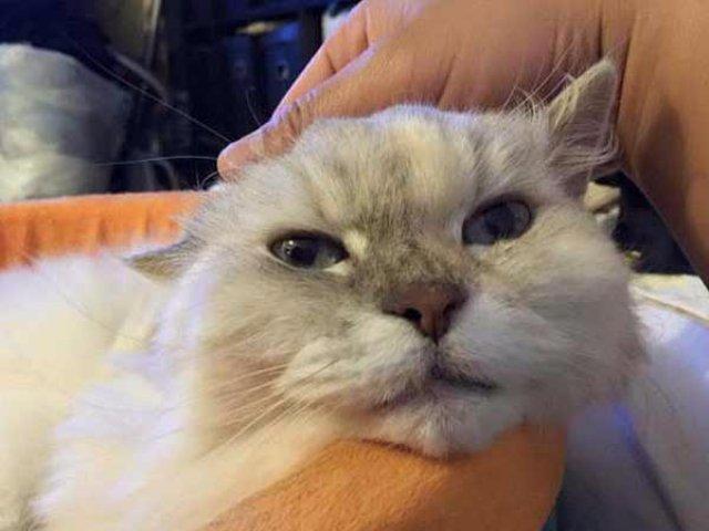 Кошка выжила после падения с 26 этажа