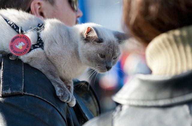 Кошка «Хонда» - лучший друг байкеров