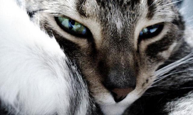 Кошка заразила людей туберкулёзом