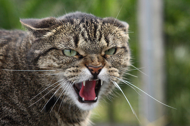 Кошки напали на женщину и повредили ей артерию