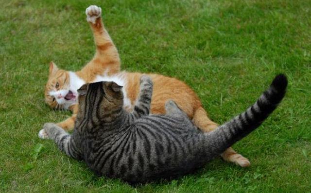 Кошки способствуют появлению астмы