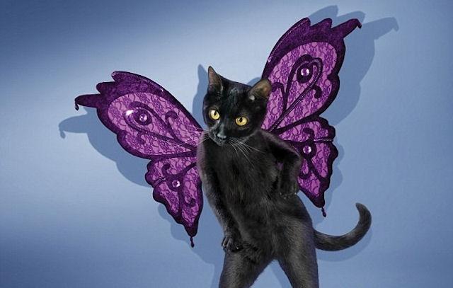Кошки – самая популярная тема для оформления календарей
