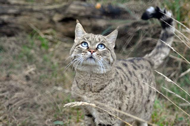 Бездомные кошки нападают на жителей Донецка