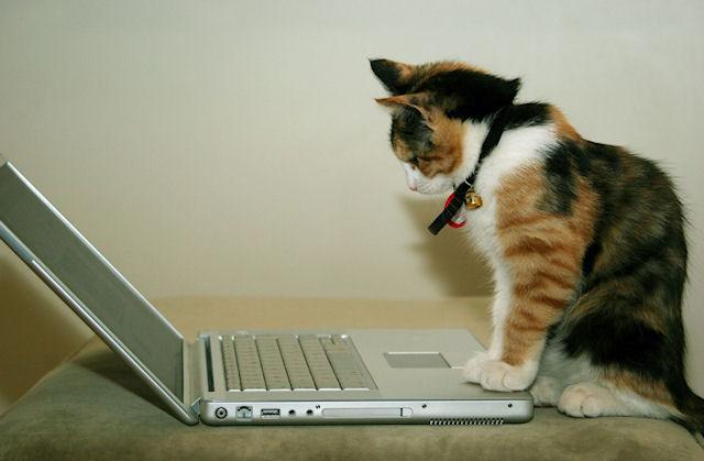 Ученые: кошки считают себя главными в отношениях с людьми