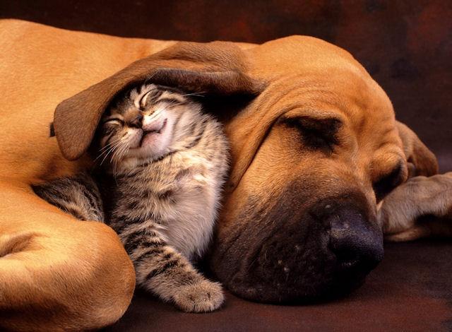Кошки и собаки чувствуют нехороших людей