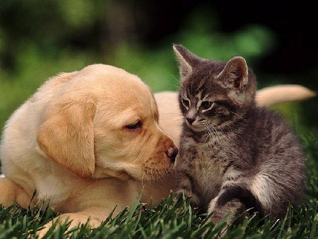 Кошки и собаки самые популярные животные на Украине