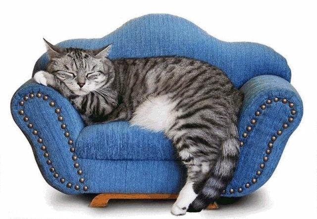 Домашние кошки любят комфорт