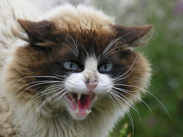 Кошки напугали своих хозяев