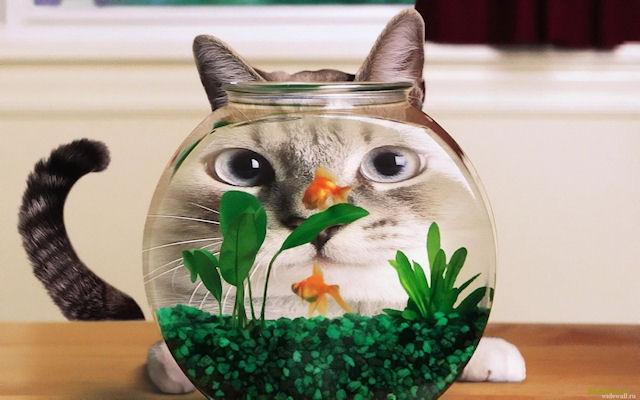 Кошки опасны для своих хозяев?