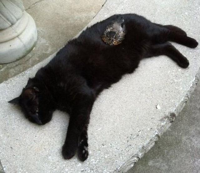 В Америке кошки подружились с птенцом