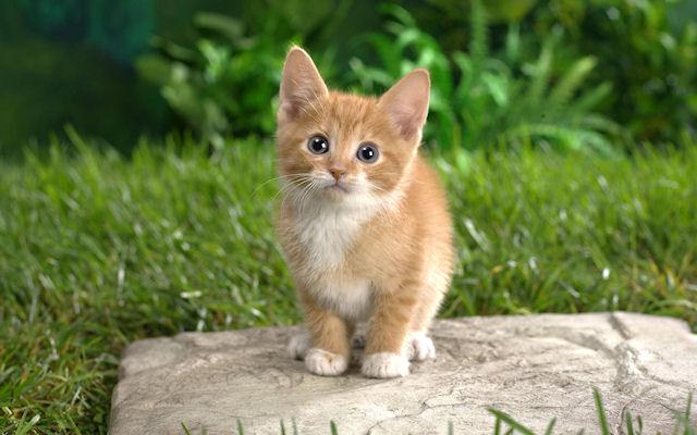 Кошки: польза и опасность для человека