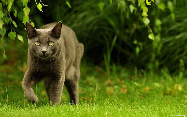 Кошки постараются стать лидерами в генетических исследованиях